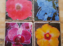 Floral Airstone Coasters